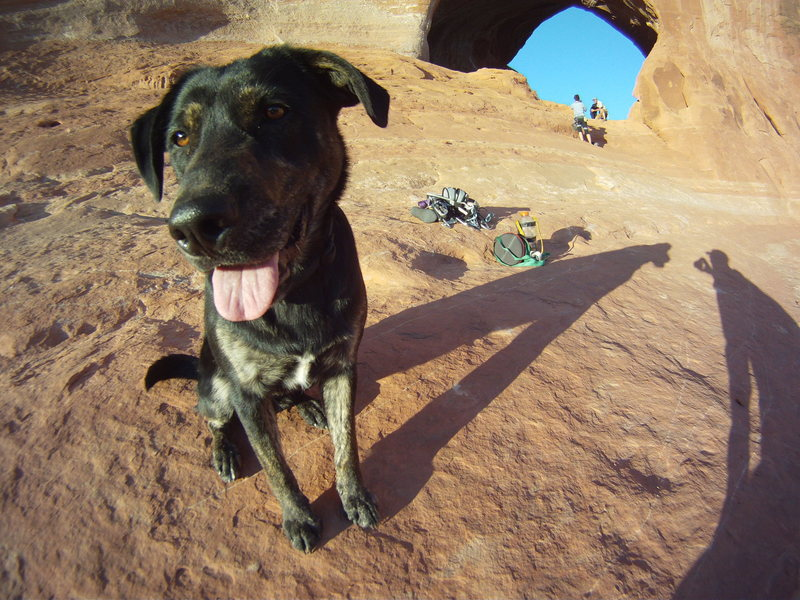 Rocky in the Canyonlands
