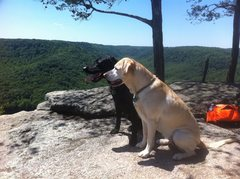 Rock Climbing Photo: crag dogs