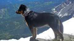 Rock Climbing Photo: Paco, Wyoming Range-ing