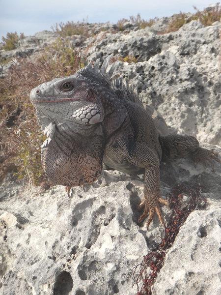 Rock Climbing Photo: GZ