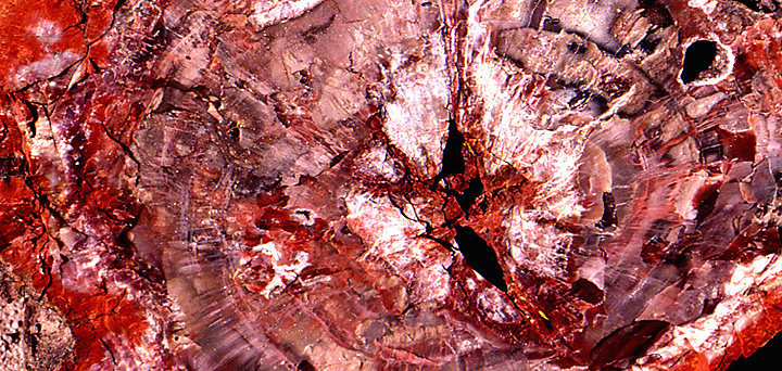 Petrified wood.<br> Photo by Blitzo.