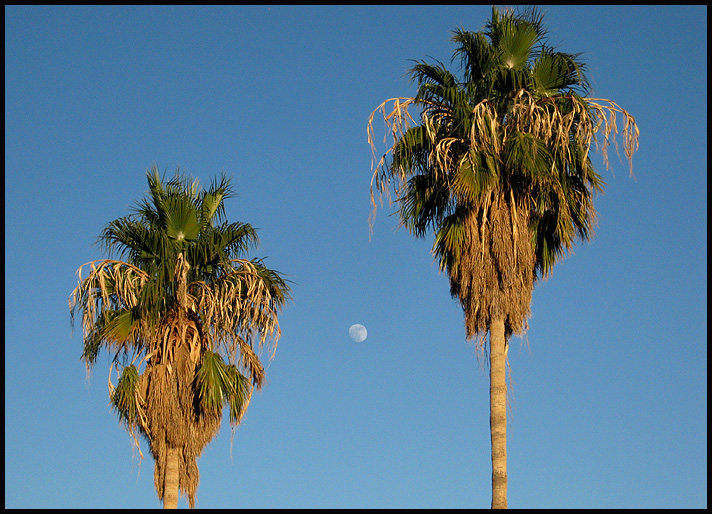 Palms and moon.<br> Photo by Blitzo.