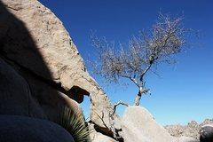 Rock Climbing Photo: Natural arch at the DQ Wall, Joshua Tree NP