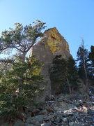 Rock Climbing Photo: P1 crack behind the tree.
