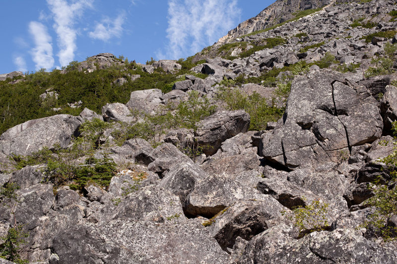 A glimpse of the lower talus field.  Large boulders in photo are up to 40 feet tall.