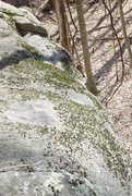Rock Climbing Photo: The slopers hidden in the moss at the top.