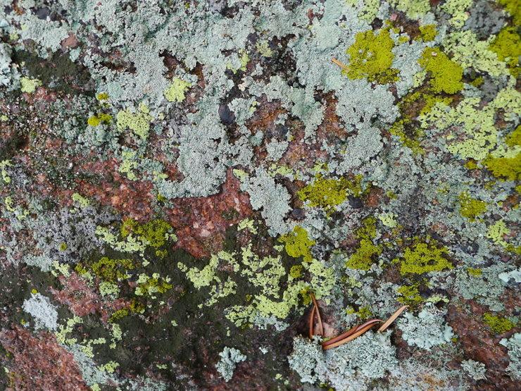 Rock Climbing Photo: Lichen photo break.