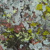 Lichen photo break.