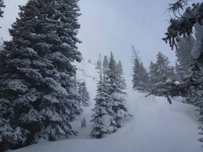 Rock Climbing Photo: Snowy woods