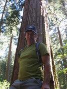 Rock Climbing Photo: Giant Redwoods