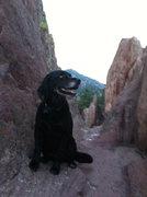 Rock Climbing Photo: loves to climb!