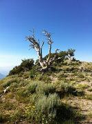 Rock Climbing Photo: half way