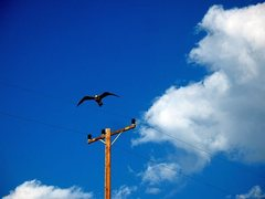 Rock Climbing Photo: Seagull and sky, Corral State Beach
