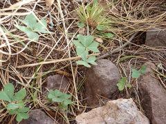 Rock Climbing Photo: oxalis