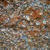 Vedauwoo lichen