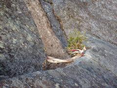 Rock Climbing Photo: P2 anchor 20130205