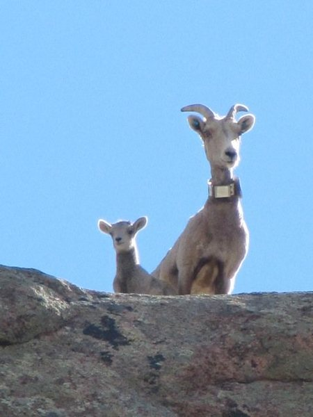 Rock Climbing Photo: Some locals checking us out from the top of the cl...