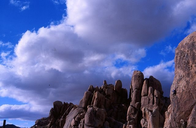 Goodbye Mr. Bond (5.10c), Joshua Tree NP. Photo by Eric Odenthal.