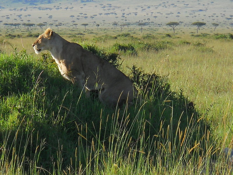 Rock Climbing Photo: MASAI-MARA  There are some interesting giant bould...