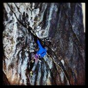 Rock Climbing Photo: In the crux - Harderline.