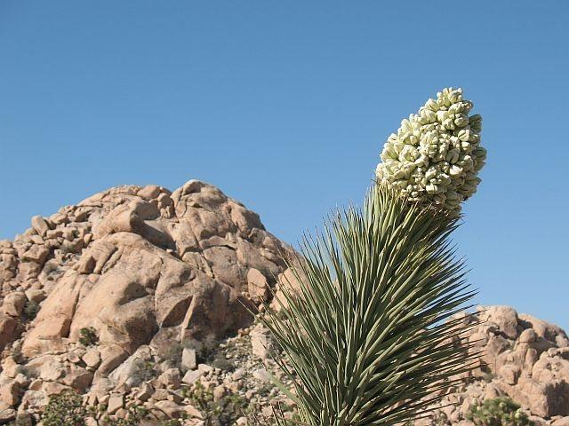 Dutzi Rock, Joshua Tree NP