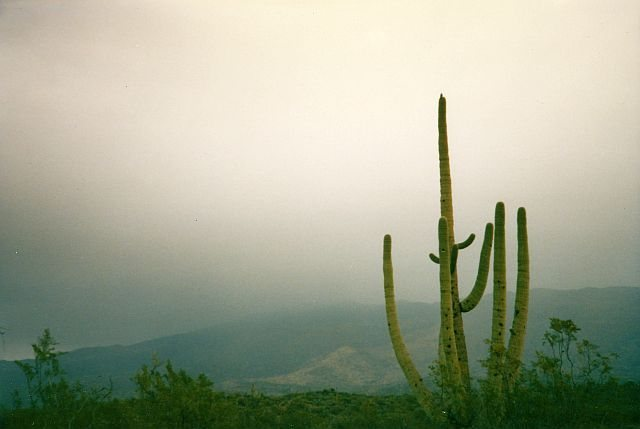Rock Climbing Photo: Saguaro NP, Southern Arizona