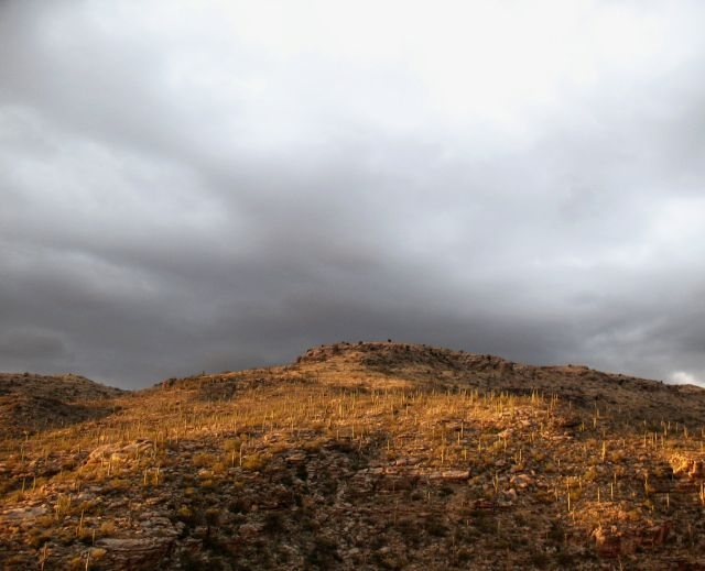 Saguaros, Mt. Lemmon Hwy