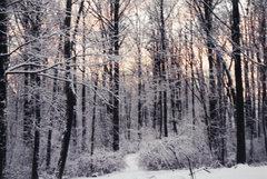 Rock Climbing Photo: Love Like Winter aka Death of Seasons