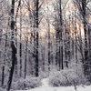 Love Like Winter aka Death of Seasons