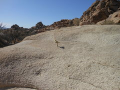 Rock Climbing Photo: A lone Cholla takes hold and fights for survival.