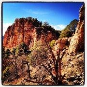 Rock Climbing Photo: Cactus