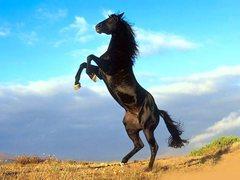 Rock Climbing Photo: the stallion