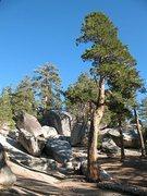 Rock Climbing Photo: Big Greeny Boulder Area, Black Mountain
