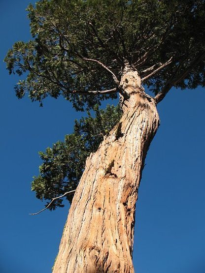 Rock Climbing Photo: A nice tree near the Big Greeny Boulder, Black Mou...