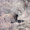 Close encounter with a bison when we accidentally wandered off trail
