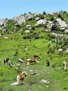 Rock Climbing Photo: Ponys is the field leading to Paradise