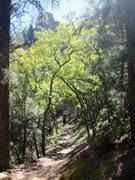Rock Climbing Photo: Hualapai hike