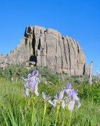 Rock Climbing Photo: Breadloaves with Iris