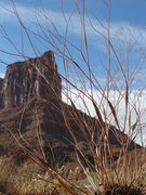 Rock Climbing Photo: Eriogonum and the mesa across the wash