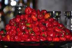 Carribean Red Scotch Bonnets