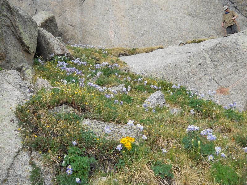 Flower covered approach and belay ledge for Columbine Crack.