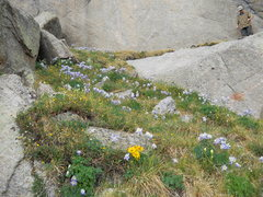 Rock Climbing Photo: Flower covered approach and belay ledge for Columb...