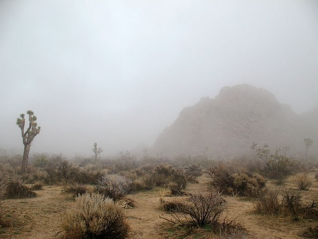 Heavy fog near Quail Springs, Joshua Tree NP