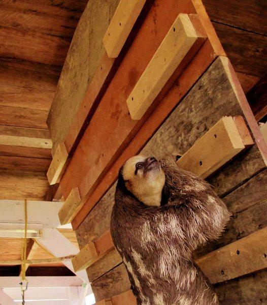 Sloth campus 1
