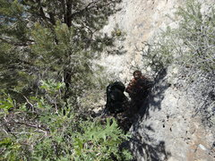 Rock Climbing Photo: Cyn hangin behind the small pine that serves as th...