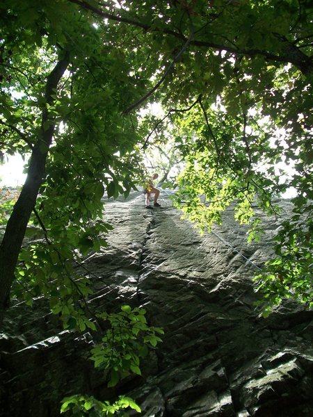 Greta through the trees.