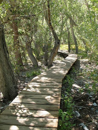 Boardwalk and Cottonwoods, Convict Lake