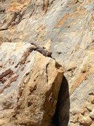 Rock Climbing Photo: Iggy, one of three very fat Chuckwalla's seen sunn...