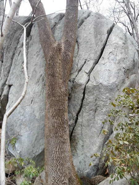 Cool boulder crack that is taller than it looks.  On ridge below the wall of solitude.
