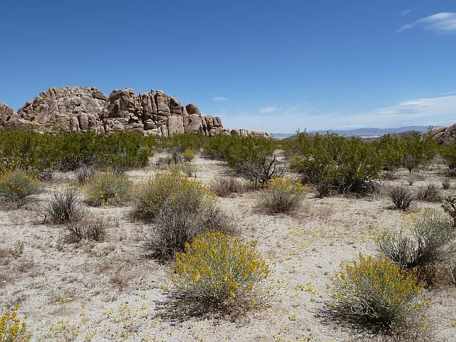Indian Cove CG, Joshua Tree NP